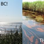 oil free beach