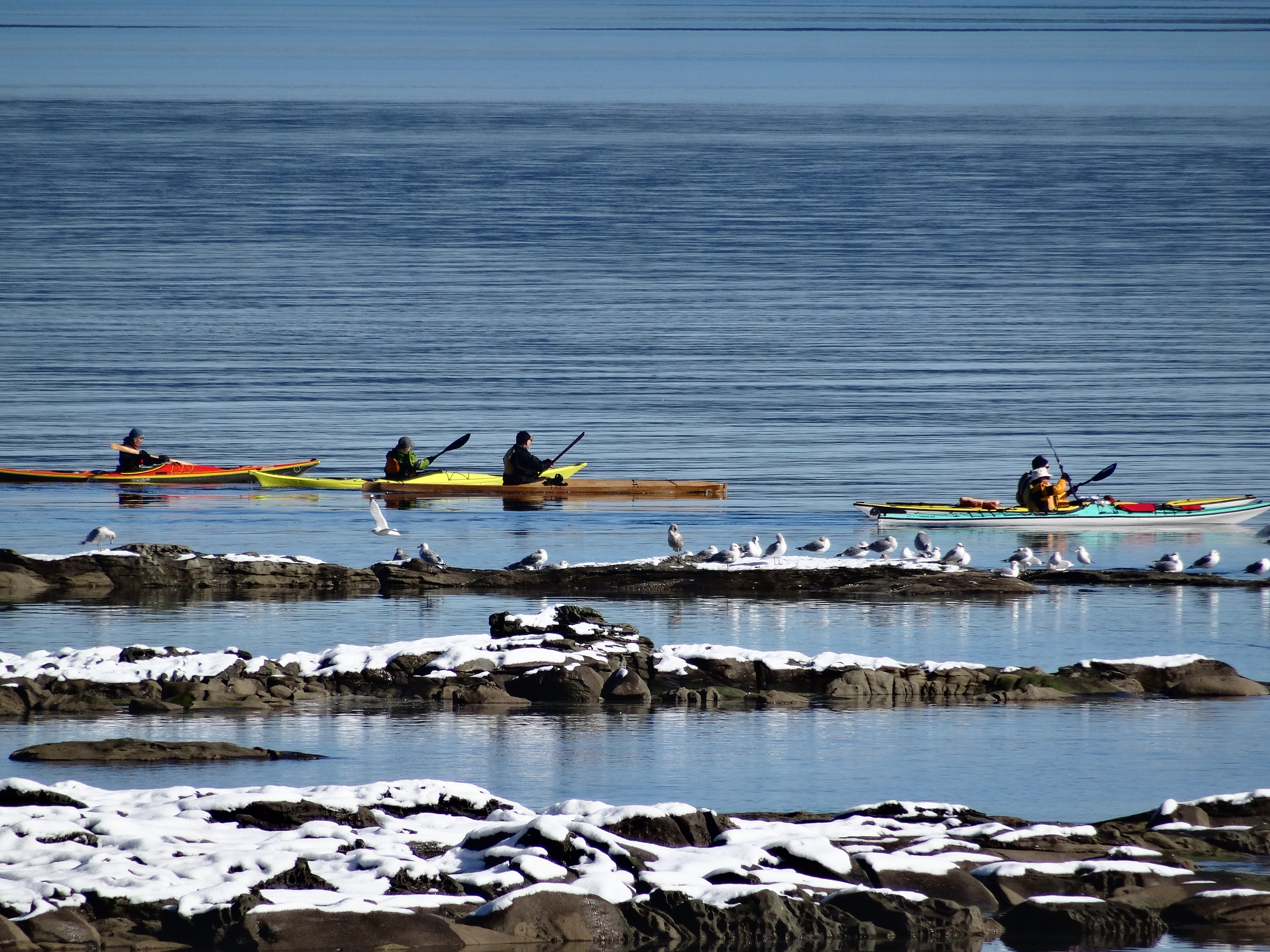 kayaking with snow and seagulls